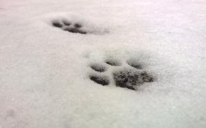 nimble_asset_Footprint